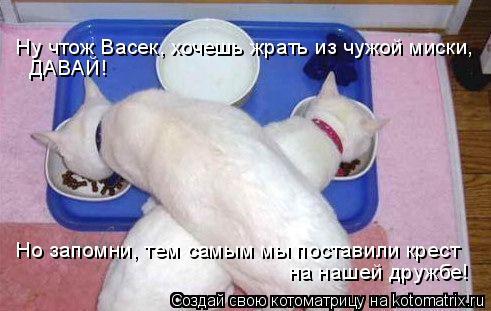 Котоматрица: Ну чтож Васек, хочешь жрать из чужой миски,  ДАВАЙ! Но запомни, тем самым мы поставили крест  на нашей дружбе!