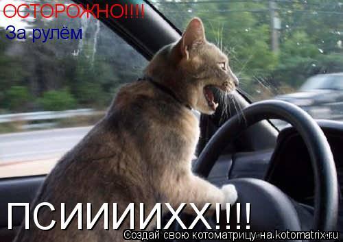 Котоматрица: ОСТОРОЖНО!!!! За рулём  ПСИИИИХХ!!!!