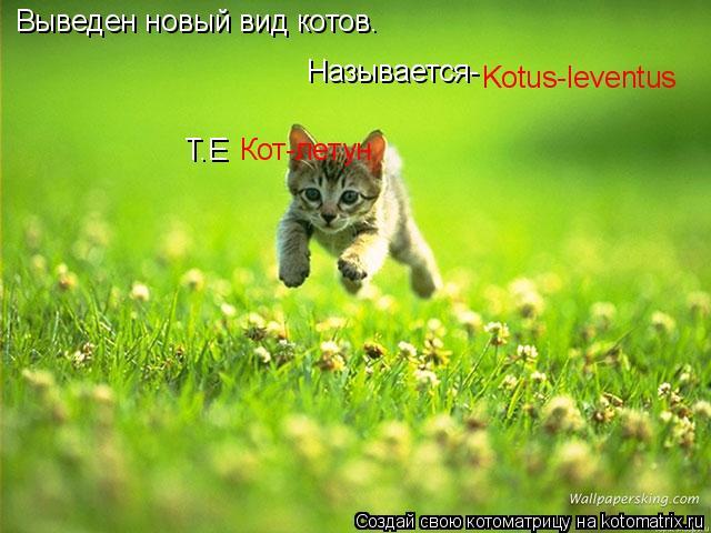 Котоматрица: Выведен новый вид котов. Называется- Kotus-leventus Т.Е  Кот-летун