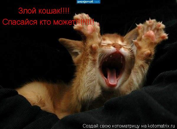 Котоматрица: Злой кошак!!!! Спасайся кто может!!!!!!!!