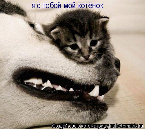 Котоматрица: я с тобой мой котёнок
