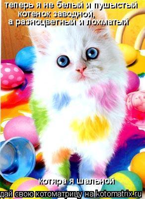 Котоматрица: теперь я не белый и пушыстый котенок заводной, а разноцветный и лохматый котяра я шальной