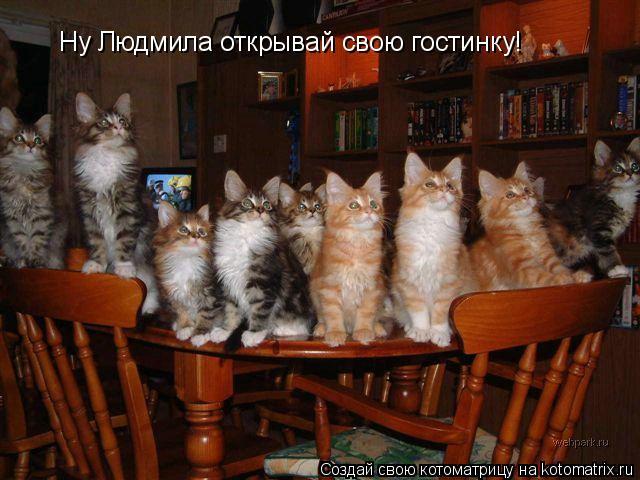 Котоматрица: Ну Людмила открывай свою гостинку!