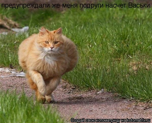 Котоматрица: предупреждали же меня подруги насчет Васьки. предупреждали же меня подруги насчет Васьки.