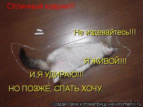 Котоматрица: Отличный коврик!!! Не издевайтесь!!! Я ЖИВОЙ!!! И Я УДИРАЮ!!! НО ПОЗЖЕ, СПАТЬ ХОЧУ.