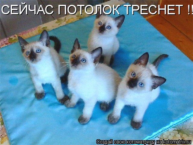 Котоматрица: СЕЙЧАС ПОТОЛОК ТРЕСНЕТ !!!