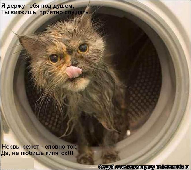 Котоматрица: Я держу тебя под душем, Ты визжишь, приятно слушать. Нервы режет - словно ток, Да, не любишь кипяток!!!