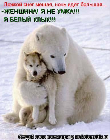 Котоматрица: Ложкой снег мешая, ночь идёт большая... ЖЕНЩИНА! Я НЕ УМКА!!! Я БЕЛЫЙ КЛЫК!!! -