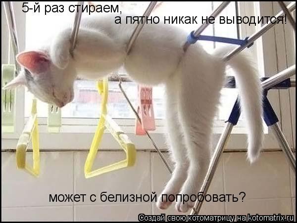 Котоматрица: а пятно никак не выводится! может с белизной попробовать? 5-й раз стираем,