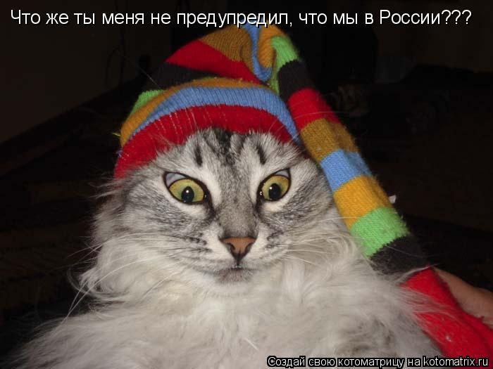 Котоматрица: Что же ты меня не предупредил, что мы в России???