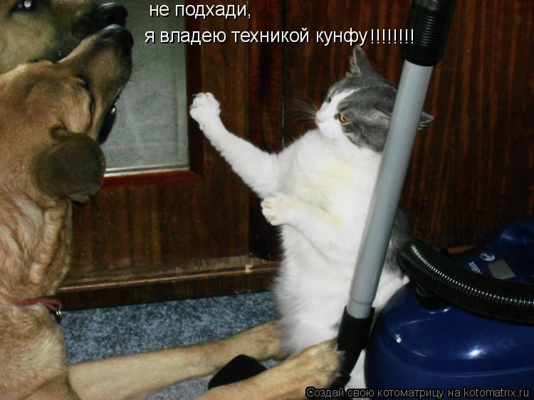 Котоматрица: не подхади, я владею техникой кунфу !!!!!!!!