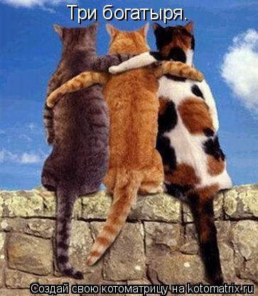 Котоматрица: Три богатыря.