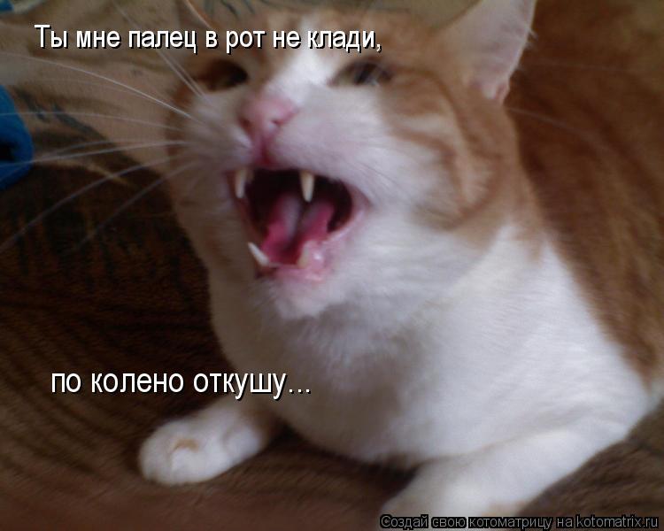 Котоматрица: Ты мне палец в рот не клади, по колено откушу...