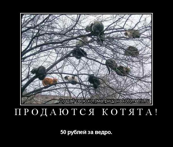 Котоматрица: Продаются котята! 50 рублей за ведро.