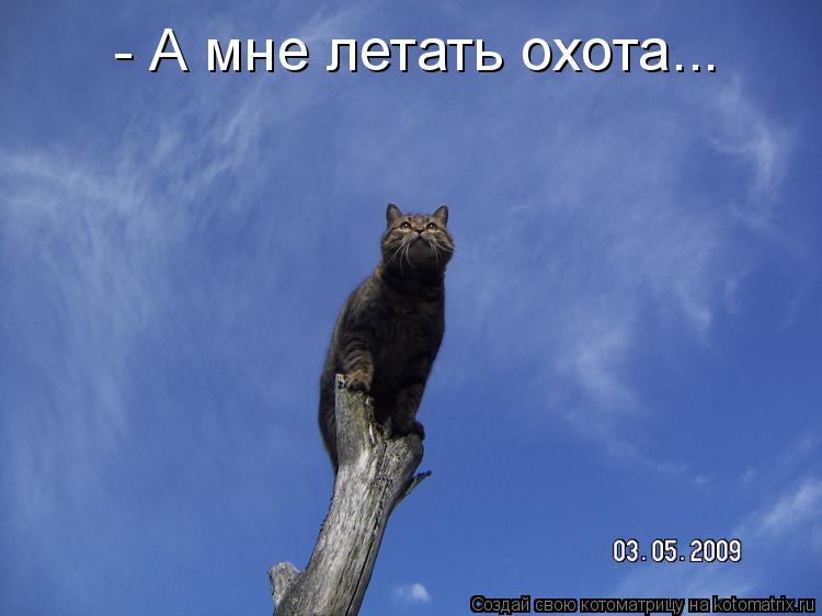 Котоматрица: - А мне летать охота...