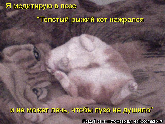 """Котоматрица: Я медитирую в позе """"Толстый рыжий кот нажрался и не может лечь, чтобы пузо не душило"""""""