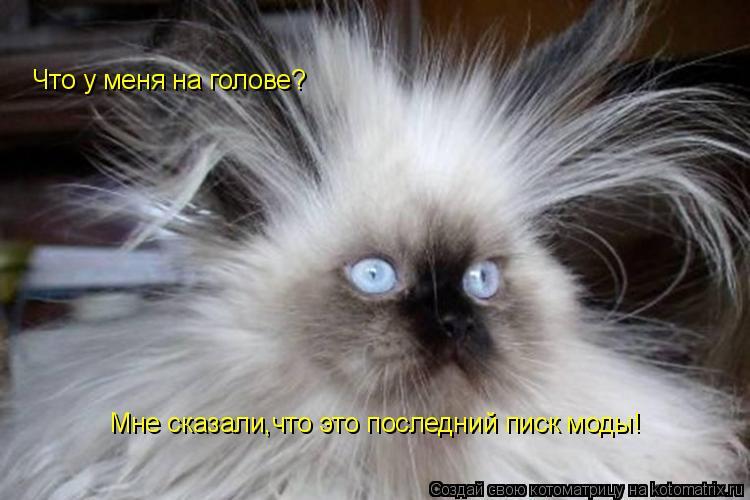 Котоматрица: Что у меня на голове? Мне сказали,что это последний писк моды!