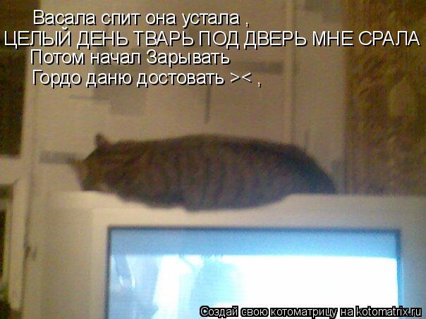 Котоматрица: Васала спит она устала , ЦЕЛЫЙ ДЕНЬ ТВАРЬ ПОД ДВЕРЬ МНЕ СРАЛА ><  Потом начал Зарывать Гордо даню достовать >< ,