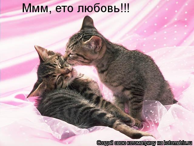 Котоматрица: Ммм, ето любовь!!!