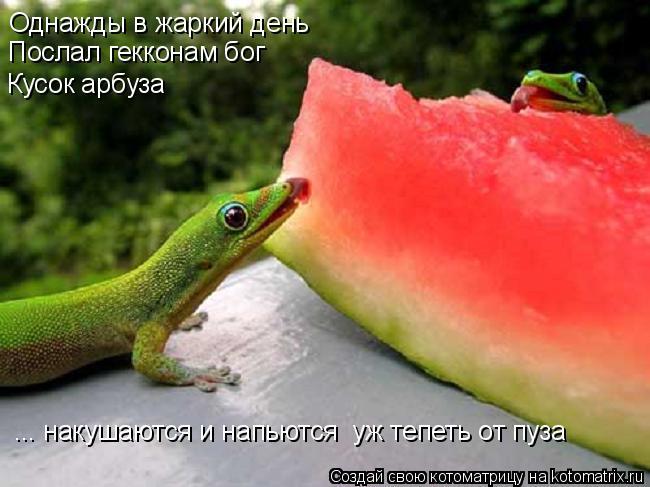 Котоматрица: Однажды в жаркий день Послал гекконам бог Кусок арбуза ... накушаются и напьются  уж тепеть от пуза