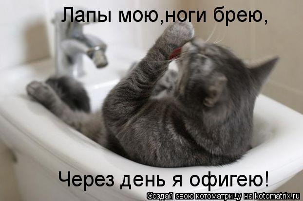 Котоматрица: Лапы мою,ноги брею, Через день я офигею!