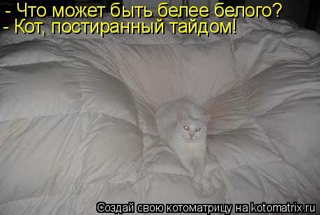 Котоматрица: - Что может быть белее белого? - Кот, постиранный тайдом!