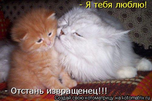 Котоматрица: - Я тебя люблю! - Отстань извращенец!!!
