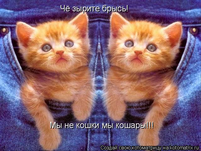 Котоматрица: Чё зырите брысь! Мы не кошки мы кошары!!!