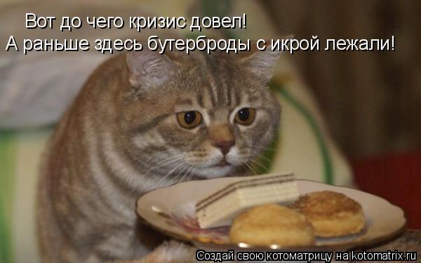 Котоматрица: Вот до чего кризис довел! А раньше здесь бутерброды с икрой лежали!