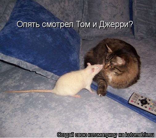 Котоматрица: Опять смотрел Том и Джерри?