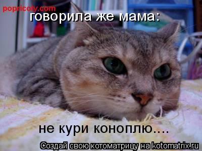 Котоматрица: говорила же мама: не кури коноплю....