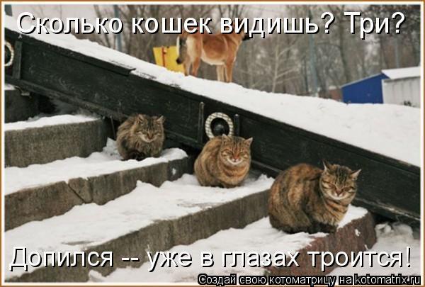 Котоматрица: Сколько кошек видишь? Три? Допился -- уже в глазах троится!