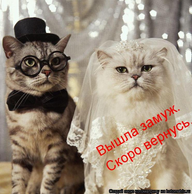 Котоматрица: Вышла замуж. Скоро вернусь.