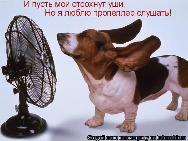 Котоматрица: И пусть мои отсохнут уши, Но я люблю пропеллер слушать!