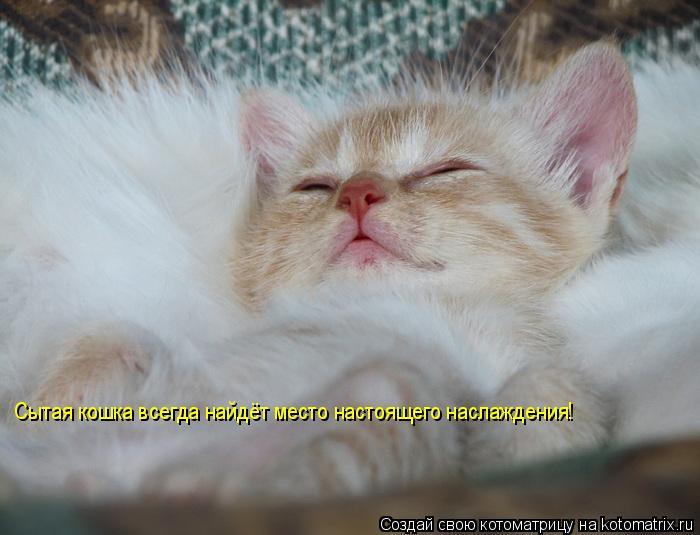 Котоматрица: Сытая кошка всегда найдёт место настоящего наслаждения!