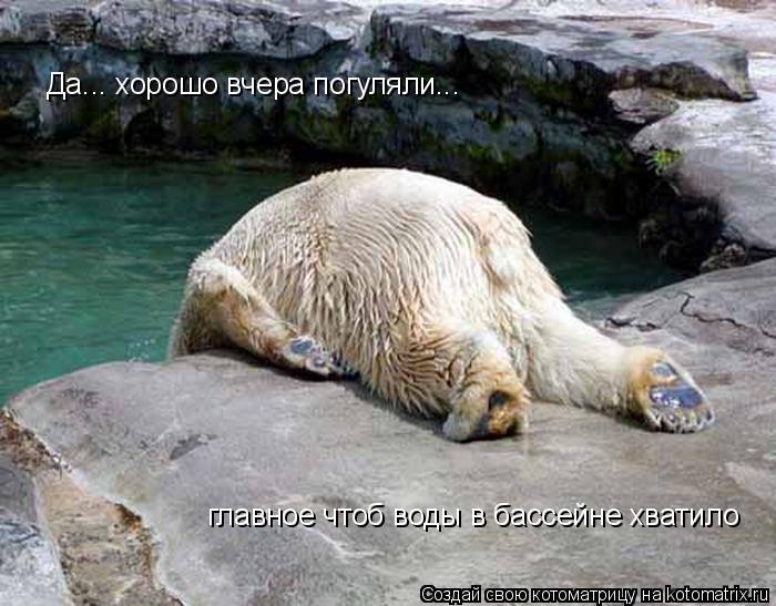 Котоматрица: Да... хорошо вчера погуляли... главное чтоб воды в бассейне хватило