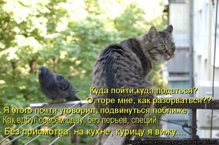 Котоматрица: Я этого почти уговорил, подвинуться поближе, Как вдруг совсем одну, без перьев, специй,  Без присмотра, на кухне, курицу я вижу.... Куда пойти,к