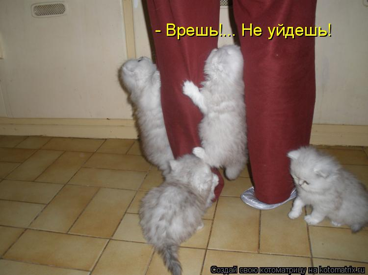 Котоматрица: - Врешь!... Не уйдешь!