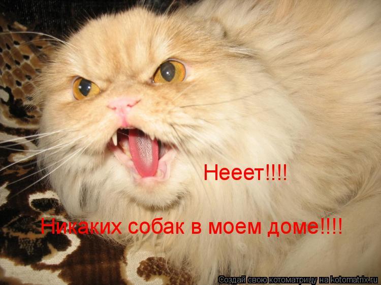 Котоматрица: Нееет!!!! Никаких собак в моем доме!!!!