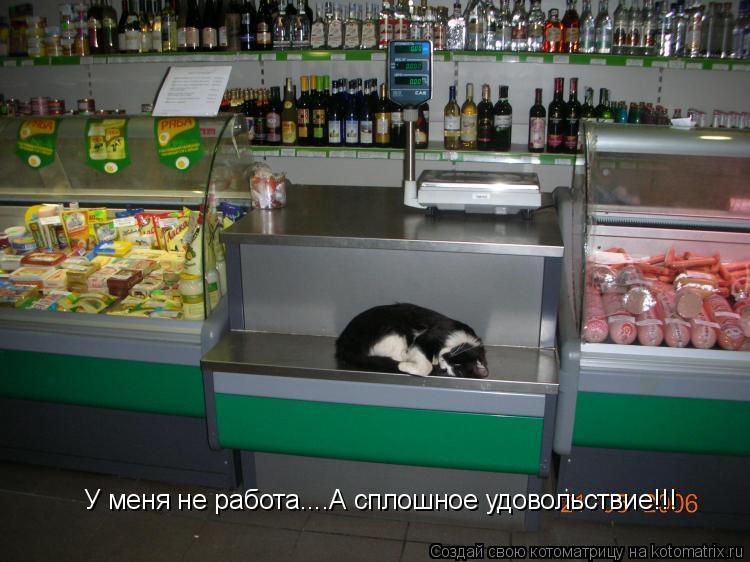 Котоматрица: У меня не работа....А сплошное удовольствие!!!