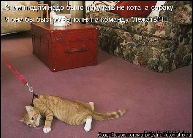 """Котоматрица: Этим людям надо было покупать не кота, а собаку- И она бы быстро выполняла команду """"лежать!""""!!!"""