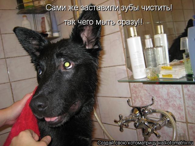 Котоматрица: Сами же заставили зубы чистить! так чего мыть сразу!!