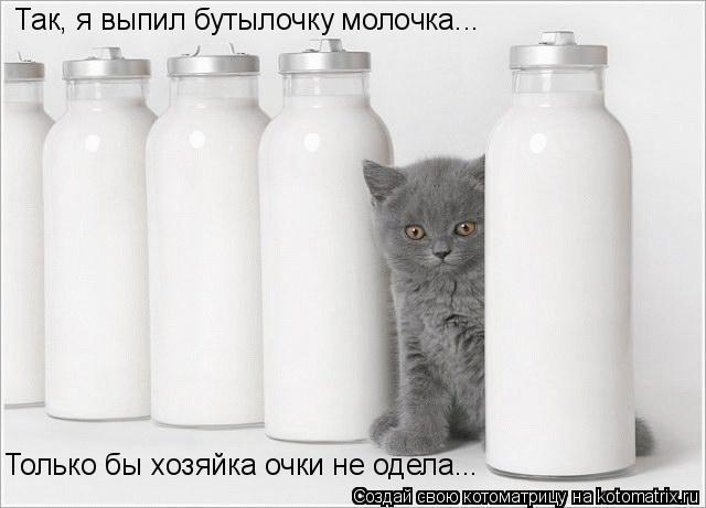 Котоматрица: Так, я выпил бутылочку молочка... Только бы хозяйка очки не одела...