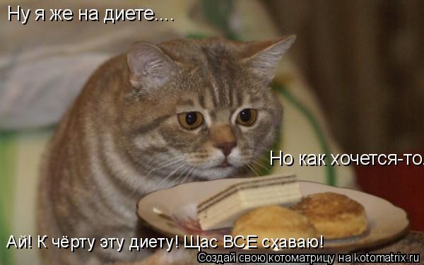 Котоматрица: Ну я же на диете.... Но как хочется-то... Ай! К чёрту эту диету! Щас ВСЕ схаваю!