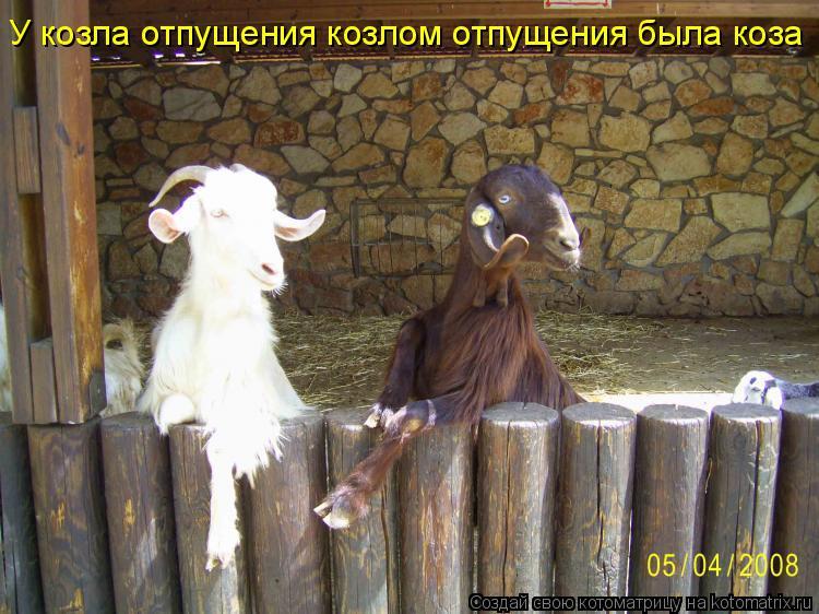 Котоматрица: У козла отпущения козлом отпущения была коза