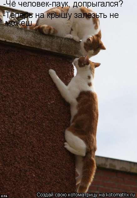 Котоматрица: -Чё человек-паук, допрыгался? -Теперь на крышу залезьть не    можеш.