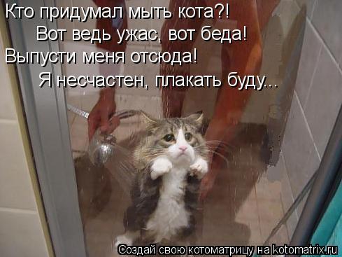 Котоматрица: Кто придумал мыть кота?! Вот ведь ужас, вот беда! Выпусти меня отсюда! Я несчастен, плакать буду...