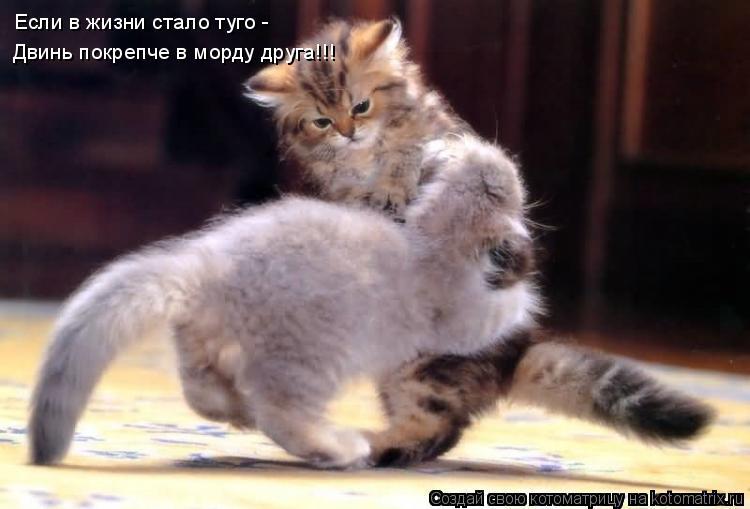 Котоматрица: Если в жизни стало туго - Двинь покрепче в морду друга!!!