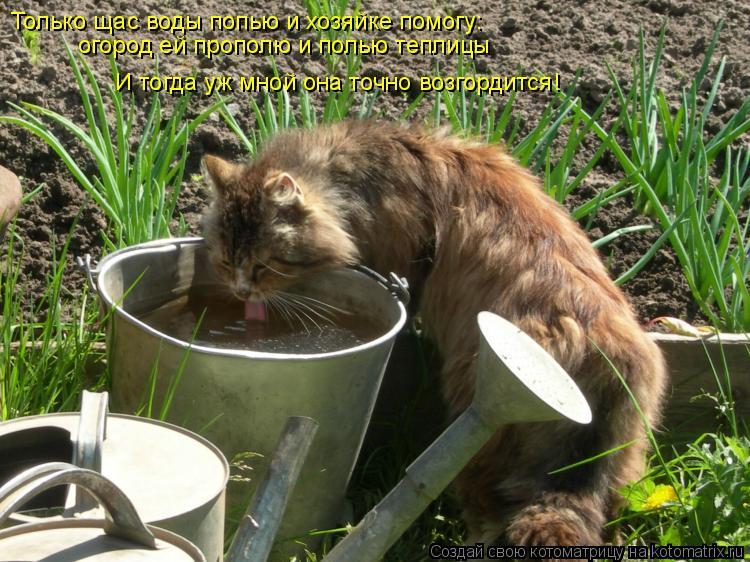 Котоматрица: Только щас воды попью и хозяйке помогу: Только щас воды попью и хозяйке помогу: огород ей прополю и полью теплицы И тогда уж мной она точно в