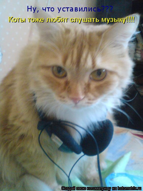 Котоматрица: Ну, что уставились??? Коты тоже любят слушать музыку!!!!